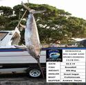 Our first Broadbill of the season was a lovely 205.8kg. Congratulations Profishionals.....